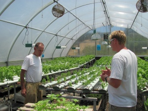 Archi's greenhouse