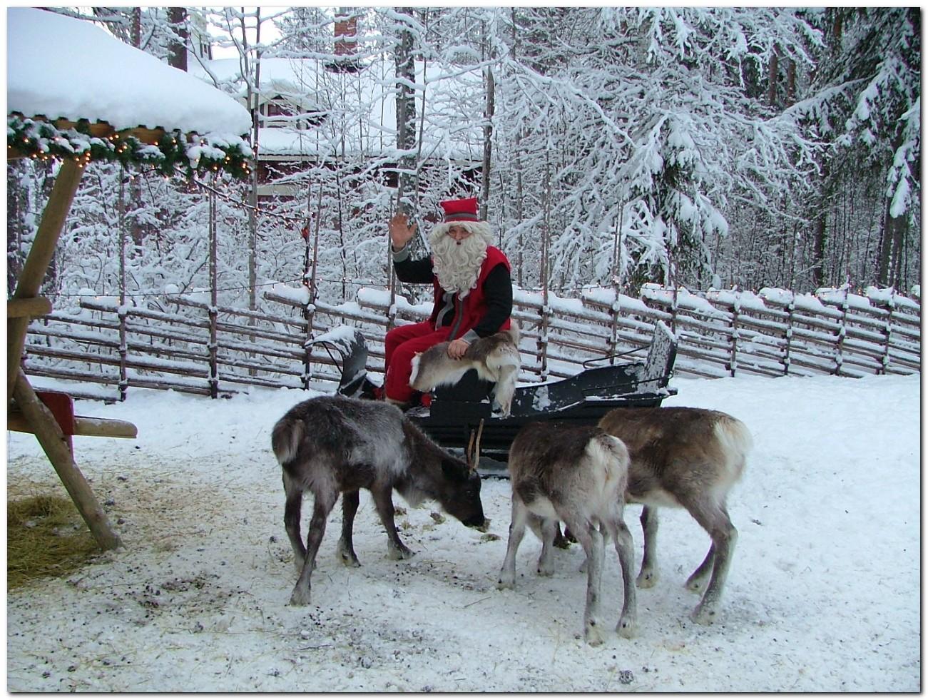 Real christmas reindeers
