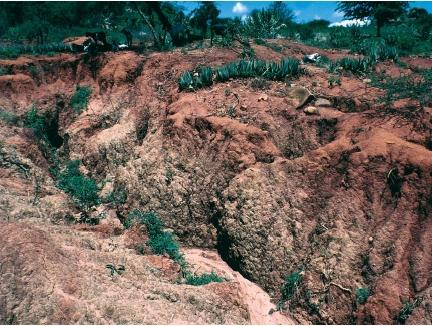 Soil erosion the quiet crisis vegetarian news and views for Soil erosion